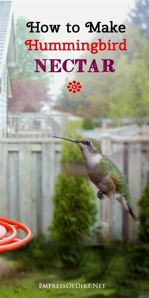 17 best ideas about hummingbird food on pinterest