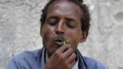 Here is why Somalia is resuming the importation of Khat   Ventures Africa