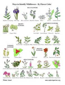 25 best ideas about plant identification on pinterest