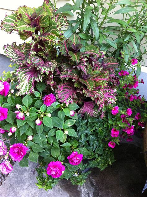 container gardening plants for success start with healthy plants for container gardening