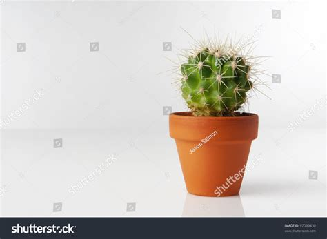 small potted cactus plants stock photo image 68600366 small cactus plant in ceramic pot stock photo 97099430
