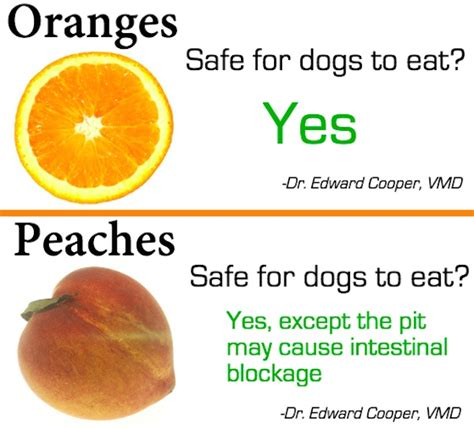 are oranges okay for dogs fruits and vegetables dogs can and cannot eat free image