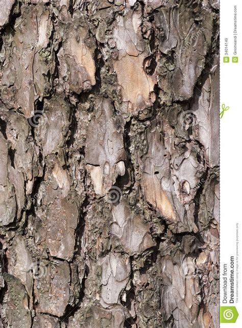 tree bark royalty free stock images image 34014149