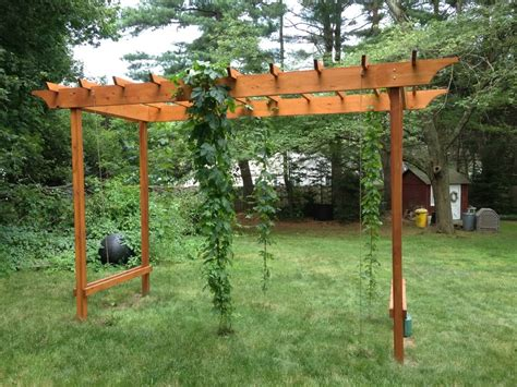 backyard grape vine trellis backyard grape trellis outdoor goods