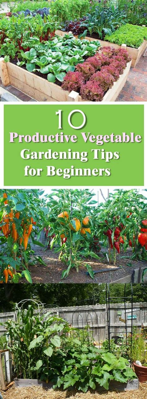 beginners guide  productive vegetable garden gardens