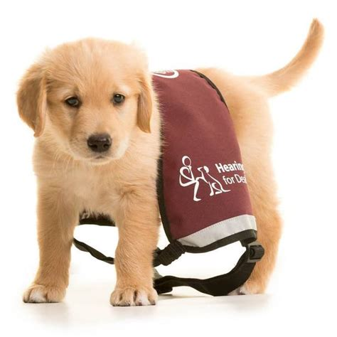 hearing dogs the great walk at pollok country park on march 22 stv glasgow glasgow