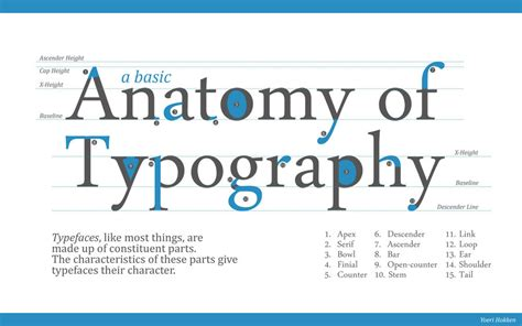 Anatomy Of Typography By Yordanh On Deviantart