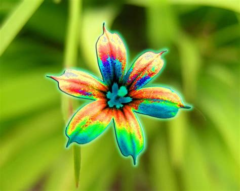 brightly colored flower bright colors image 18658331