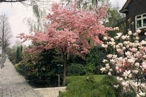 welcher obstbaum für kleinen garten ideen f 252 r den kleinen garten tipps ideen auf