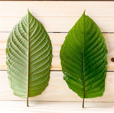 Detox From Heroin On Kratom by What Is Kratom And Can It Ease Opiate Withdrawals