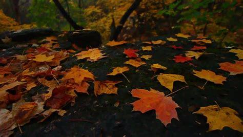 Landscape Rock Yorkville Il Illinois Autumn Forest Scenery Stock Footage 3603614