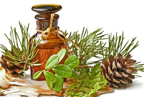 Minyak Pinus herbal alami manjur obat sakit gout info obat herbal