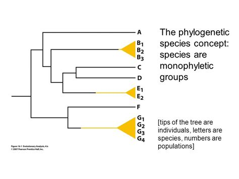 the phylogenetic species concept species concepts in biology ppt download