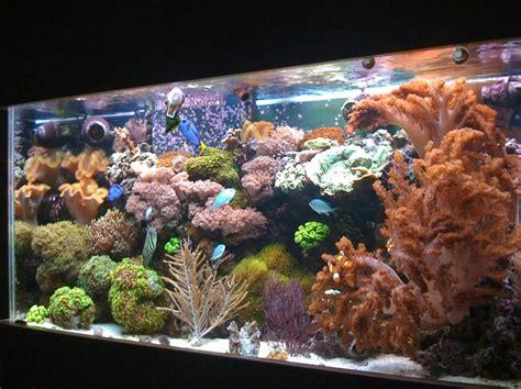 Hiasan Akuarium Coral Anemon S most beautiful reef tanks 2008 ratemyfishtank