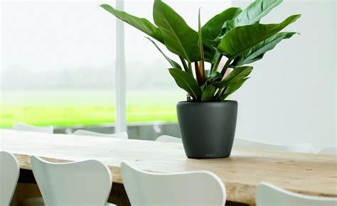 Desk Plants That Clean The Air by Air Cleaning Plants Archives Metropolitan Wholesale
