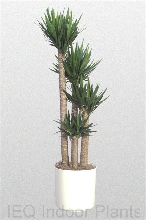 best plants for dark rooms 25 best ideas about indoor palms on pinterest palm