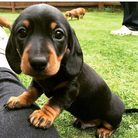 fotos animales bebes tiernos las 25 mejores ideas sobre ojos de cachorro en pinterest y