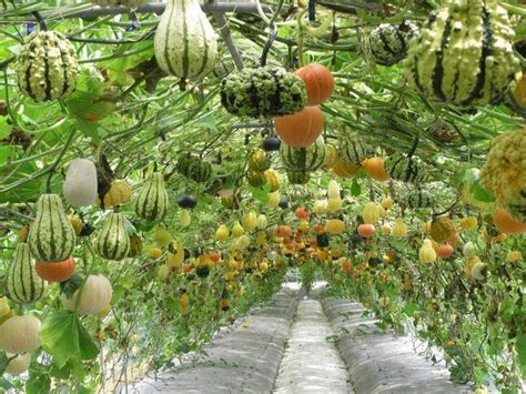 5 stunning vertical vegetable gardening ideas