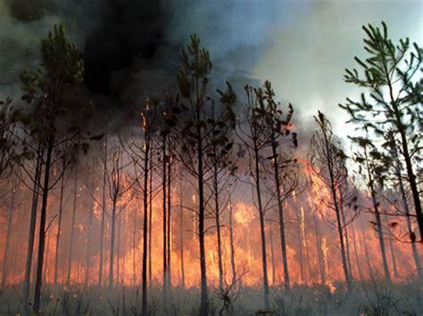 hochzeitskleid nähen lassen kosten naturkatastrophen kosten immer mehr geld