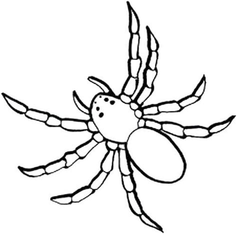 black spider coloring page black spider of animals coloring page cute spider