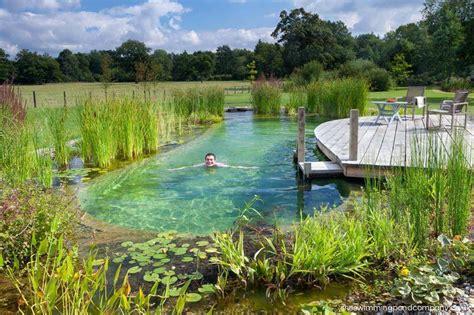 backyard swimming ponds the swimming pond company ltd