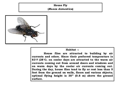 blo fly murda types of flies and there attributes