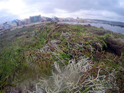 tabla de mareas 2016 de morro de so paulo bahia para la un paseo en la marea m 225 s baja del a 241 o miplaya
