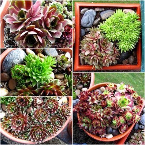 do aloe plants need sunlight do aloe plants need sunlight 100 do aloe plants need