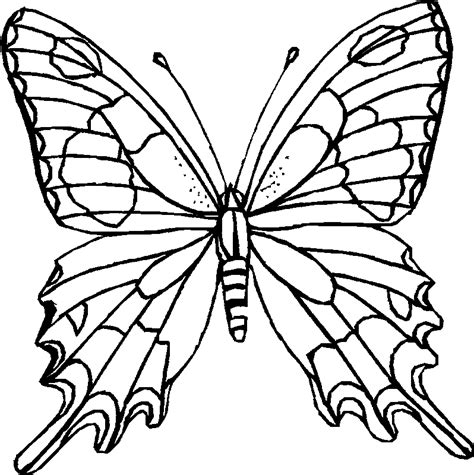 coloring page butterfly butterfly coloring printables for