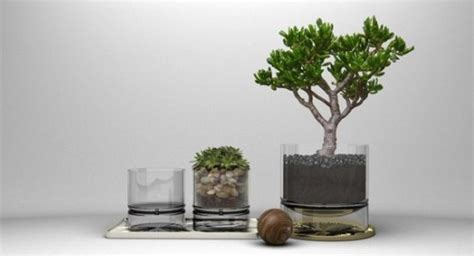 indoor trees that don t need indoor plants that don t need much sun 32 great house