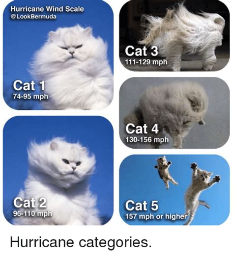 Meme Categories - hurricane wind scale bermuda cat 1 74 95 mph cat 2 96 110
