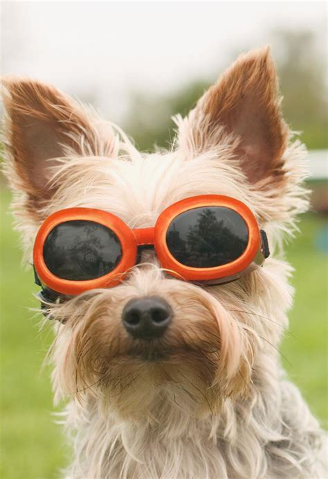 Dog in Sunglasses Blank Thinking of You Card   Greeting