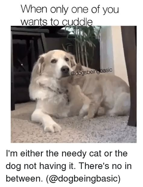 Doge Girl Meme - when only one of you wants to cuddle being basic i m