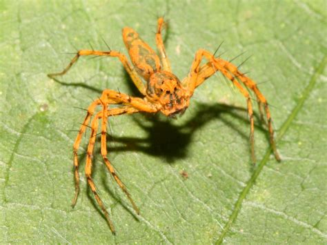 Spider Search Spider Images Search