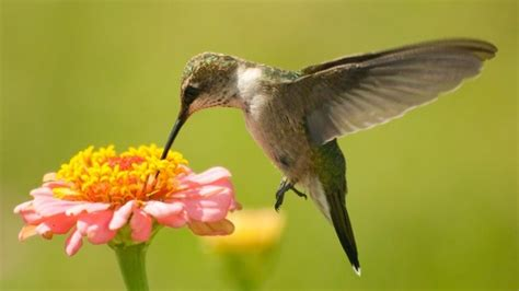top 10 plants and flowers that attract hummingbirds to your yard the self sufficient living