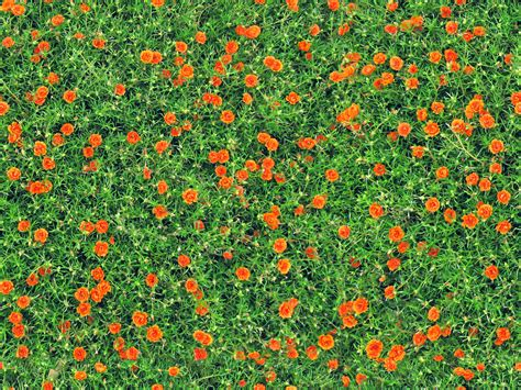 Garden Flowering Plants Free Images Nature Blossom Field Lawn Meadow Prairie Texture Bloom Summer Orange