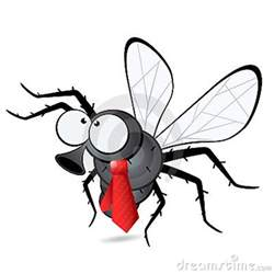 fly wearing a tie down by the bay pinterest ties