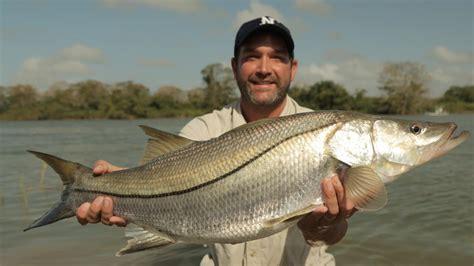 pesce testa di serpente fish pesci giganti national geographic channel