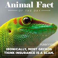 1000 Animal Fact 1000 images about animal facts on animal
