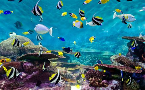 fishes  coral underwater life wallpaperscom