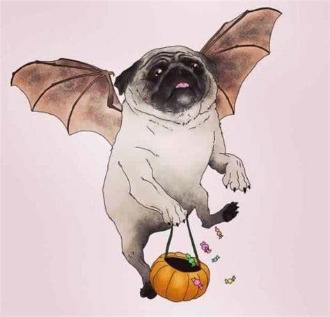 pug tricks 78 best pug images on pug pug and pugs