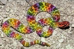 rainbow colored snake rainbow snake by screamemotion on deviantart
