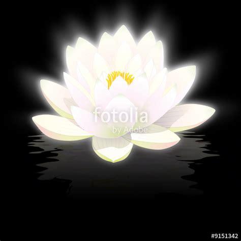 Acheter Fleur De Lotus by Quot Fleur De Lotus Blanc Sur Fond Noir Avec Reflets Quot Photo