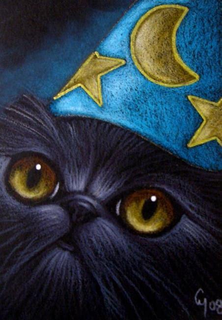 wizard cat black wizard hat