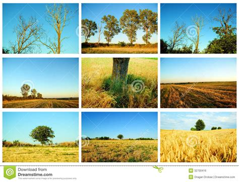 imagenes de naturaleza varias agriculture and nature collage royalty free stock image