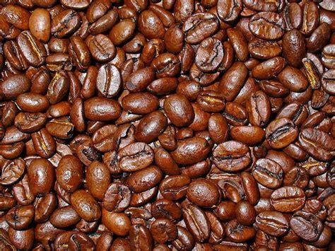 Arabica Toraja Coffee Roasted Beans file coffea arabica 005 jpg wikimedia commons