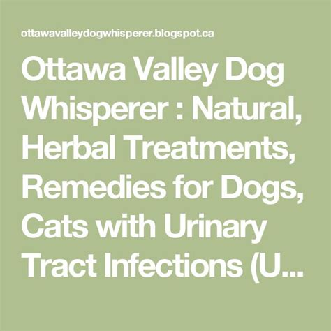 urinary tract infection in dogs 17 best ideas about urinary tract infection on