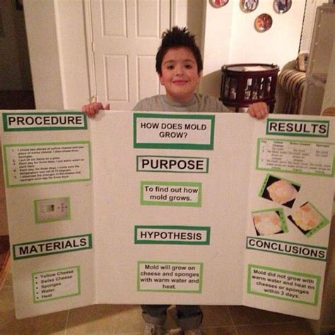 Potatoes And Mold Detox by Best 25 Science Fair Board Layout Ideas On
