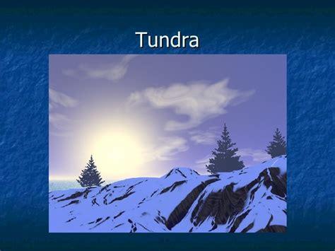 maquetas de la tundra ecosistemas