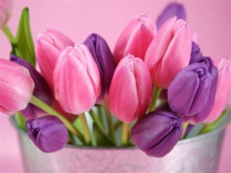 imagenes de flores tulipanes im 225 genes de flores y plantas tulipanes
